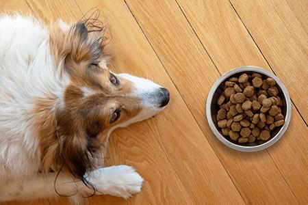 Dra, qual o papel da melatonina no tratamento da pancreatite em cães?