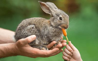 Que os coelhos não são roedores?