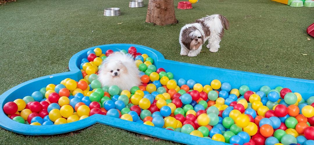 espaço day care com piscina Clinivel